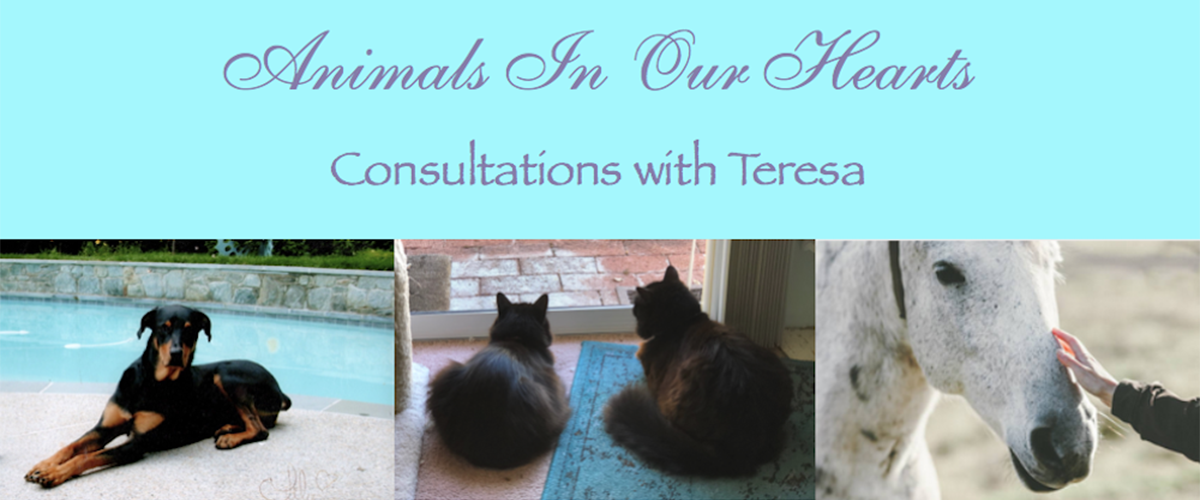 Animals In Our Hearts Consultations with Teresa Wagner