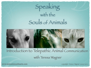 Keynote_Animal_Communication.001