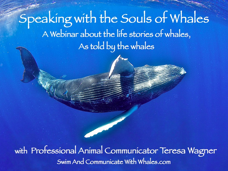 Whale Webinar Cover Slide copy