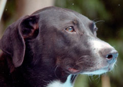 Animal Communication Image dog