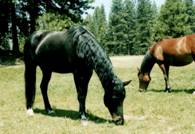 Animal Communicator with horse