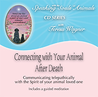 Connecting with your animal after death